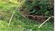 Phát hiện thi thể đang phân hủy trong bụi cây ở Bình Phước