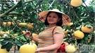 Lục Nam nâng chất lượng cam, bưởi