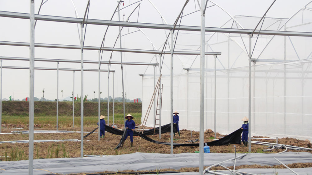 Bac Giang builds organic farming model