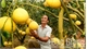 Luc Ngan: More than 26,000 fruit growing households granted with VietGAP and GlobalGAP certificates