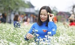 Những vườn cúc họa mi đẹp tinh khôi tại Bắc Giang