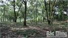 Hỗ trợ kinh phí bảo vệ rừng dẻ cho người dân
