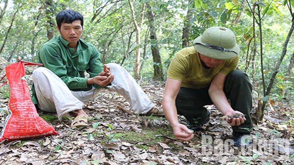Lục Nam, hỗ trợ kinh phí, bảo vệ rừng dẻ, Tây Yên Tử