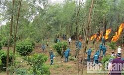 Lục Nam: Cháy hơn 1,1 ha rừng trồng