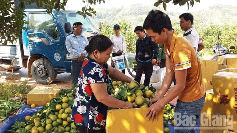 Luc Ngan welcomes ripen fruit season