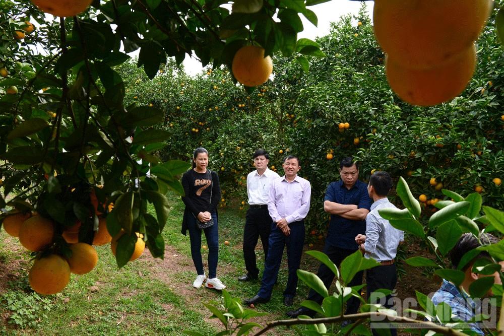 Du khách đến tham quan một nhà vườn tại thôn Bằng Công, xã Kiên Thành...