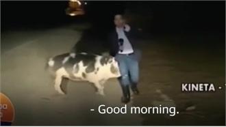 Phóng viên bị lợn tấn công khi đang ghi hình
