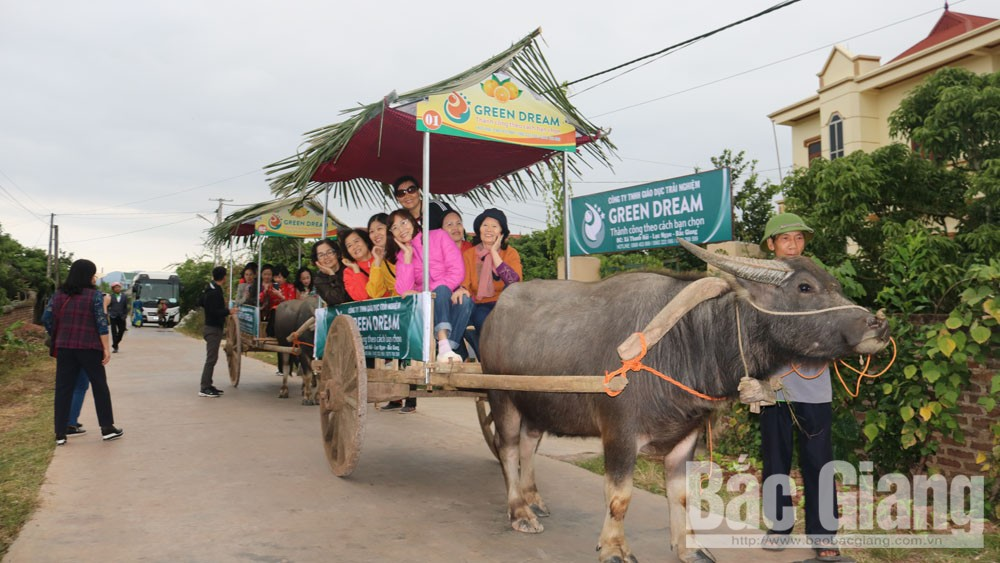 Travel agency, Bac Giang province, Luc Ngan fruit orchards,  Green Dream, traditional culinary, community based tourism development