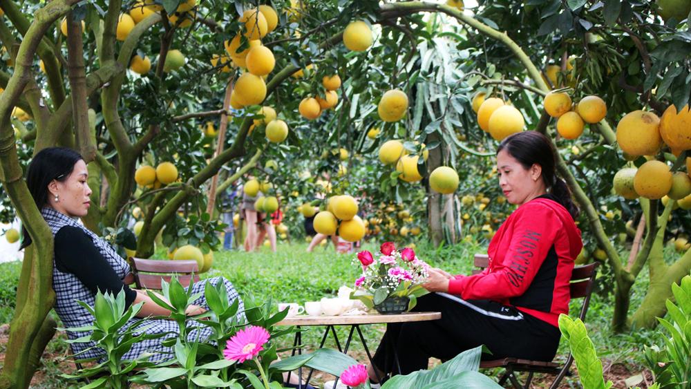 lục ngạn xanh, bốn mùa cây trái, thu hút du khách gần xa, thăm vườn đồi