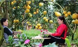 Lục Ngạn bốn mùa cây trái