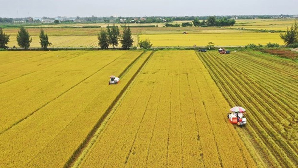 Can Tho city, JICA look into agricultural cooperation