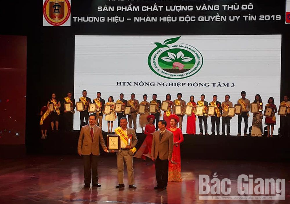 Bac Giang province, Black seedless grape, melon, Dong Tam 3 Cooperative, top 50, prestigious exclusive, trademarks and brands