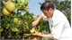 Bac Giang develops Luc Ngan citrus brand