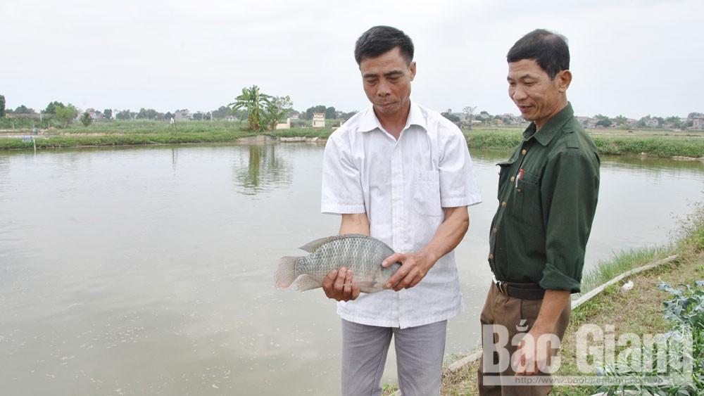 Ông Nguyễn Xuân Vui (trái)cùng thành viên trong tổ hợp tác kiểm tra cá thương phẩm.