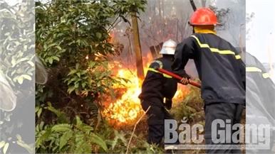 Cháy rừng phòng hộ tại Yên Dũng