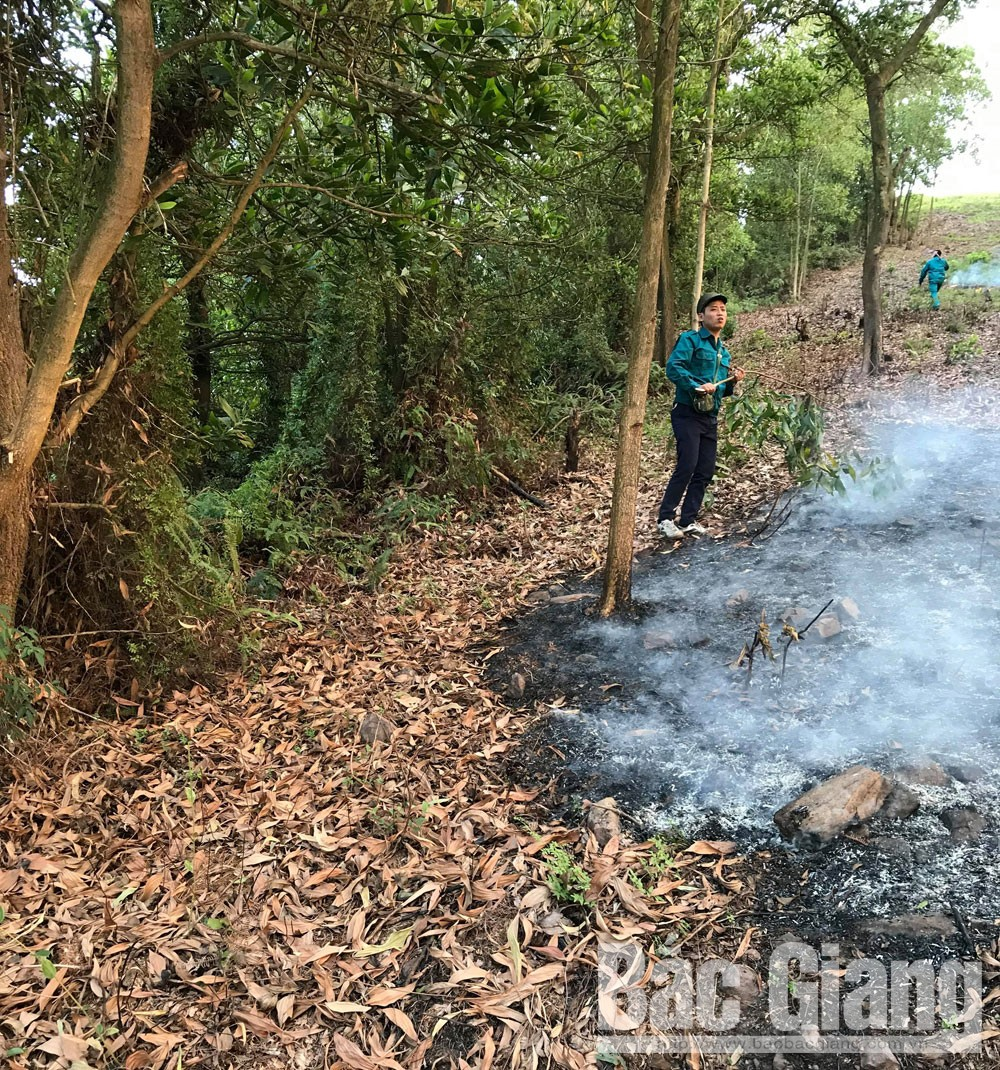 Yên dũng, cháy rừng, Cháy rừng phòng hộ tại Yên Dũng