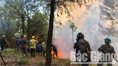 Rừng phòng hộ tại Yên Dũng tiếp tục cháy