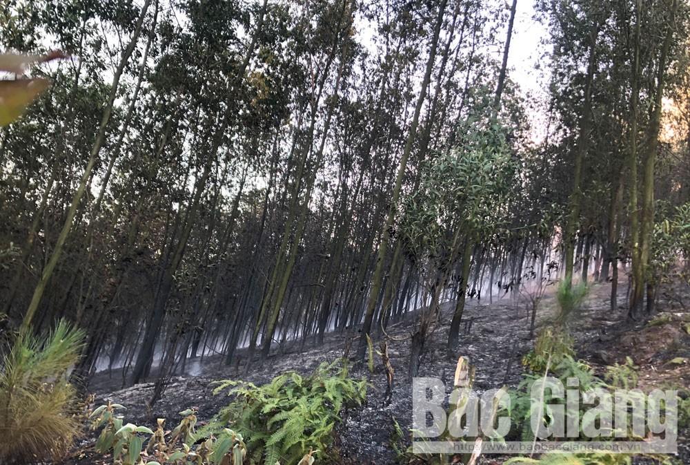 Yên dũng, cháy rừng, cháy rừng tại yên dũng
