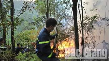 Vụ cháy tại Yên Dũng: Thiệt hại hàng chục ha rừng