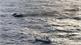 Cháy tàu cá Hàn Quốc: Tìm thấy một thi thể thuyền viên Việt mất tích