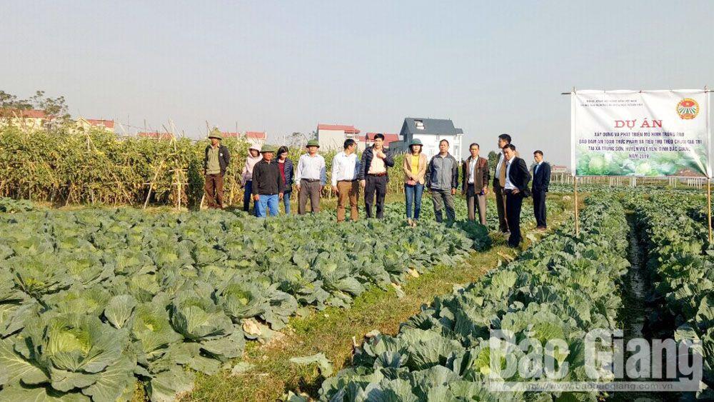 Nghiệm thu, dự án sản xuất rau an toàn sinh học, theo chuỗi giá trị, Trung Sơn, Hội Nông dân tỉnh, bắc giang