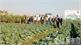 Nghiệm thu dự án sản xuất rau an toàn sinh học theo chuỗi giá trị