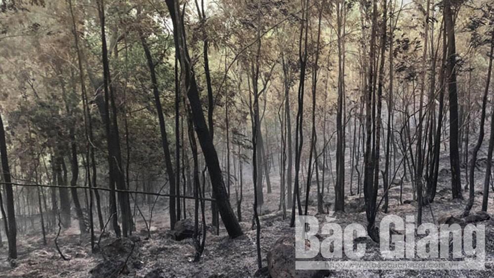 thành phố bắc giang, xã song mai, cháy rừng song mai