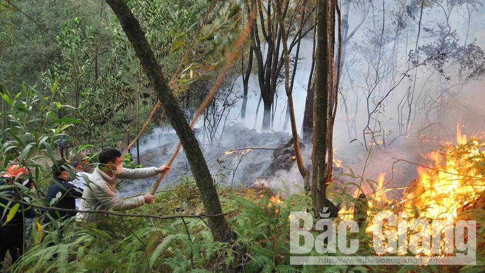 Tăng cường, công tác, bảo vệ rừng, phòng cháy, chữa cháy rừng, Bắc Giang