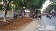 TP Bắc Giang: Sắp có thảm hoa làm đẹp hè phố khu vực cổng Bệnh viện Đa khoa tỉnh