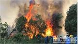 Cấp bách bảo vệ rừng mùa khô
