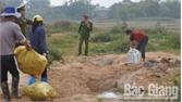 Bắc Giang: Tiêu huỷ 700 kg thịt lợn bốc mùi không rõ nguồn gốc