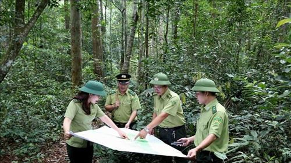 Vietnam, tourism development, protective forests, special-use forests,  national economy, national workshop,  high biodiversity