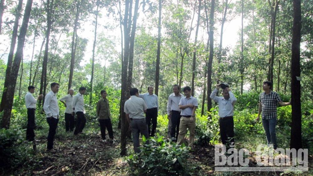 Trồng rừng, Hướng phát triển bền vững, Tổng cục Lâm nghiệp, Chi cục Kiểm lâm