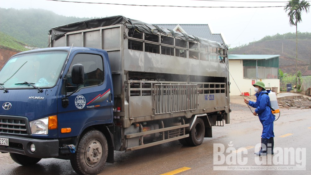 Công ty Hòa Phát Bắc Giang: Cung cấp ra thị trường gần một nghìn con lợn thịt/tuần