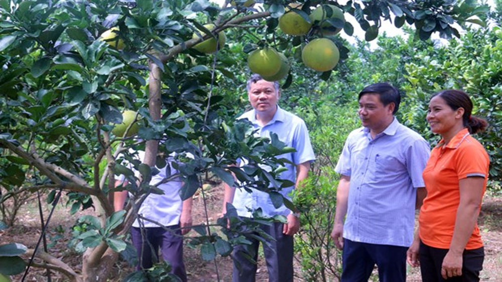 Farm-based economy contributes to new rural area building in Bac Ninh