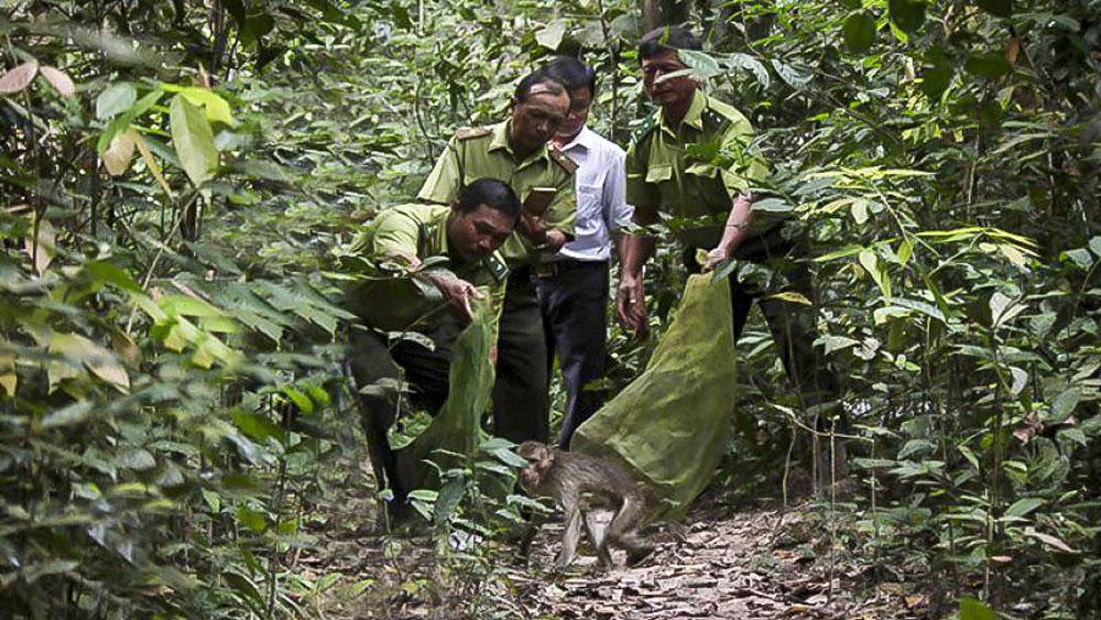 WWF, Vietnam, wildlife trafficking, World Wide Fund,  forest rangers, wild animals,  criminal charges, elephant riding tourism