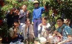 Bắc Giang: Tích cực chuẩn bị các điều kiện xuất khẩu vải thiều sang Nhật Bản
