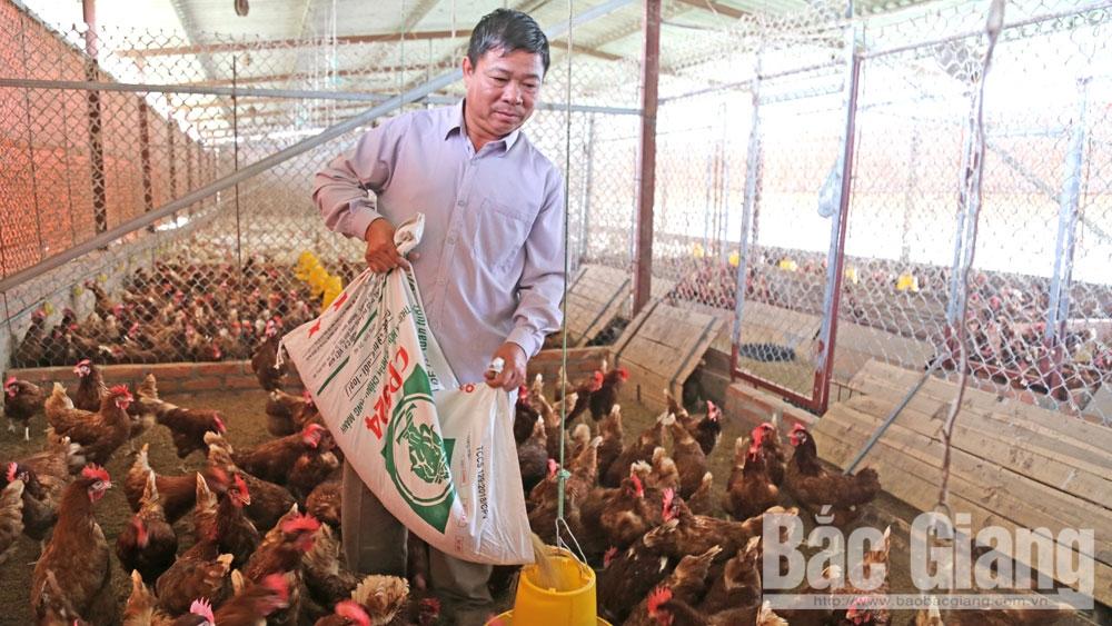 Hiệu quả cao, nuôi gà siêu trứng, kết hợp thủy sả, nông dân sản xuất, kinh doanh giỏi,