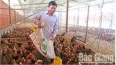 Hiệu quả cao từ nuôi gà siêu trứng kết hợp thủy sản