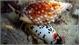 Quảng Bình: Một ngư dân tử vong, 7 người khác nhập viện cấp cứu nghi ăn ốc biển