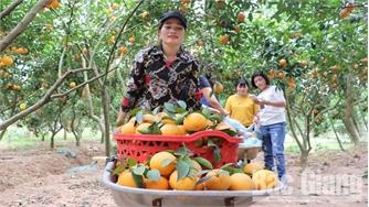 Lục Ngạn: Thu gần 600 tỷ đồng từ cam, bưởi