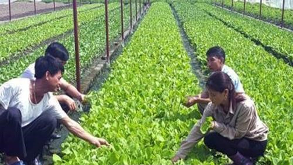 Japanese firms interested in high-tech farming in Bac Lieu