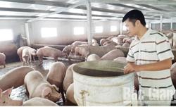 Bắc Giang: Chăn nuôi thu bạc tỷ