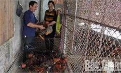 Giá gà đồi Yên Thế tăng mạnh