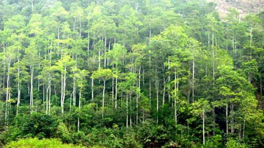 Công bố Bộ tiêu chuẩn FSC Quốc gia về Quản lý rừng Việt Nam