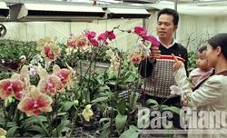 Chợ hoa năm ấy
