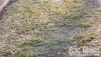 Bắc Giang: Nhiều diện tích rau màu bị hư hại do mưa đá