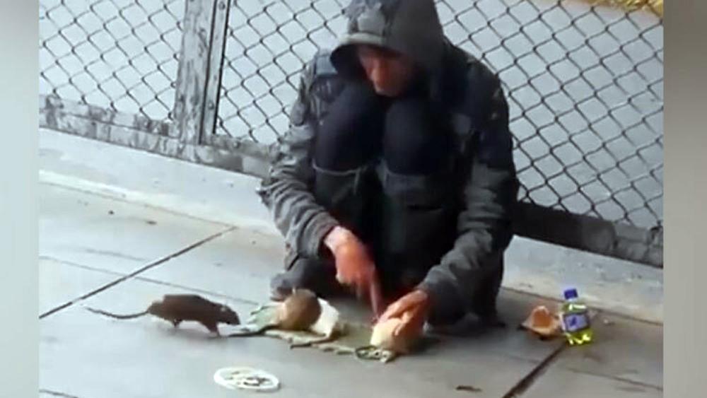 Chuột biểu diễn xiếc