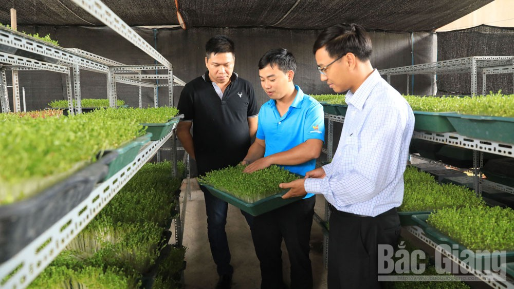 Agriculture, digital era, Bac Giang province, technology application, product output and quality,  sufficient nutrition, smart technology