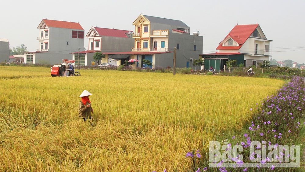 Outstanding progress, Bac Giang province, agriculture and rural area, new rural style communes,  income value, value chain